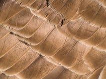 bakgrundsfjäder Arkivfoto