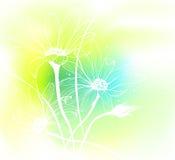 bakgrundsfjäder Royaltyfria Bilder