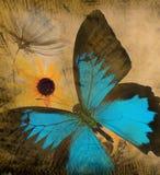 bakgrundsfjärilsgrunge Fotografering för Bildbyråer