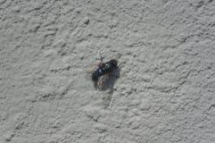 Bakgrundsfluga på väggen Fotografering för Bildbyråer