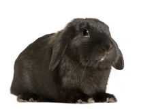 bakgrundsframdelen lop kaninwhite Royaltyfri Bild