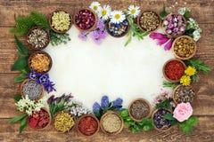 Bakgrundsgräns för växt- medicin royaltyfri bild