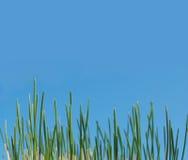 bakgrundsgräs Arkivbild