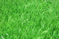 bakgrundsgräsgreen royaltyfria foton