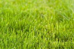 bakgrundsgräsgreen Arkivbild