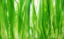 bakgrundsgräsgreen Arkivfoto