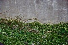 Bakgrundsgräsplan, grå vägg Royaltyfria Foton