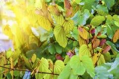 Bakgrundsgräsplansidor är ljusa och ljusa Royaltyfria Foton