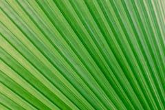 Bakgrundsgräsplansidor arkivfoton