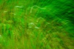 Bakgrundsgräsplansuddighet Arkivbild