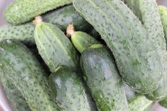 Bakgrundsgrönsakgurka Arkivfoto