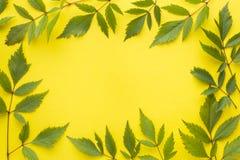 bakgrundsgreen låter vara yellow sommar för snäckskal för sand för bakgrundsbegreppsram Plan position, bästa sikt, kopieringsutry Fotografering för Bildbyråer