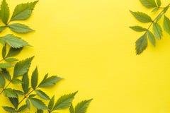 bakgrundsgreen låter vara yellow sommar för snäckskal för sand för bakgrundsbegreppsram Plan position, bästa sikt, kopieringsutry Royaltyfri Bild
