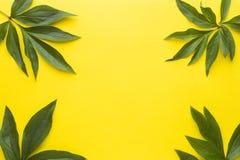 bakgrundsgreen låter vara yellow sommar för snäckskal för sand för bakgrundsbegreppsram Plan position, bästa sikt, kopieringsutry Royaltyfri Fotografi