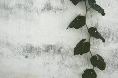 bakgrundsgrunge Arkivfoton