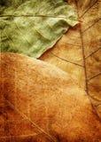 bakgrundsgrungeväxt Fotografering för Bildbyråer