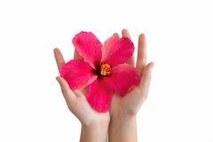 Bakgrundshand och blomma Royaltyfria Foton