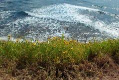Bakgrundshav med den gula blomman Royaltyfria Foton