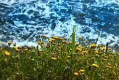 Bakgrundshav med den gula blomman Fotografering för Bildbyråer