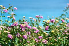 Bakgrundshav och blommor Fotografering för Bildbyråer