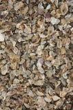 bakgrundshavet shells textur Royaltyfri Bild