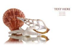 bakgrundshavet shells white Royaltyfri Bild