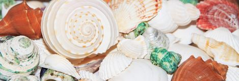 bakgrundshavet shells white Royaltyfria Bilder