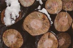 bakgrundsjournaler sörjer Timmerbransch Trädstammar textur och bakgrund för formgivare Sörja loggar in vinterskogen Arkivfoton