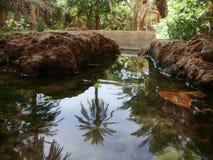 bakgrundskanalen cracked flottörhus grönt mudväxtvatten Arkivfoton