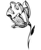 bakgrundsknoppblomman skissar white Arkivfoto