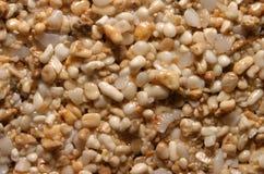 bakgrundskorn sand textur Royaltyfria Bilder