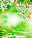 bakgrundskortet blommar rengöringsduk för universal för mall för hälsningsliljasida Royaltyfri Fotografi