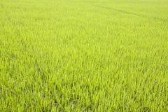bakgrundskurvgräs isolerade white för lawnperspektivsikt Fotografering för Bildbyråer