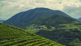 Bakgrundslandskapsikt av druvafält och den alpina byn i avståndet bland bergen Royaltyfria Bilder