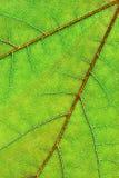 bakgrundsleafvertical Royaltyfria Bilder