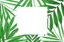 bakgrundsleaves gömma i handflatan white Arkivbild