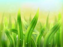 Bakgrundsmakro för grönt gräs Royaltyfri Bild