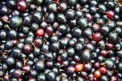 Bakgrundsmat - svart vinbär Arkivfoton