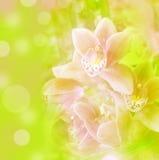 bakgrundsorchid Royaltyfri Foto