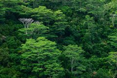bakgrundsrainforesttrees Royaltyfri Fotografi