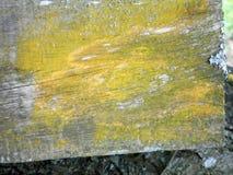 Bakgrundsram för inskriften - ett träbräde som är bevuxet med mossa Royaltyfri Bild