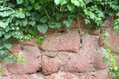Bakgrundsram, från hängande över lövverk över en sten Royaltyfri Bild