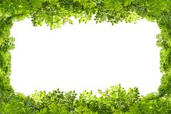 bakgrundsramgreen isolerade vita leaves Royaltyfri Fotografi