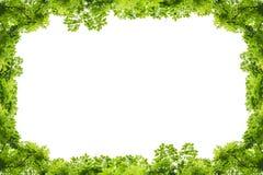 bakgrundsramgreen isolerade vita leaves Royaltyfria Foton