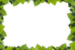 bakgrundsramgreen isolerade vita leaves Arkivbilder