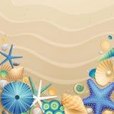 bakgrundssanden shells sjöstjärnor Royaltyfria Bilder