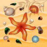 bakgrundssanden shells sjöstjärnor för illustrationsky för fjärilar grön vektor för tema för sommar Royaltyfri Bild