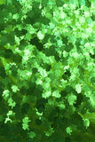 bakgrundsshamrock Arkivfoto