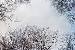 Bakgrundssikt för himmel och träd Fotografering för Bildbyråer