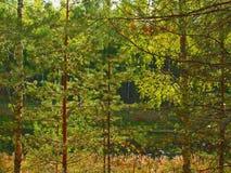 bakgrundsskog Arkivbild
